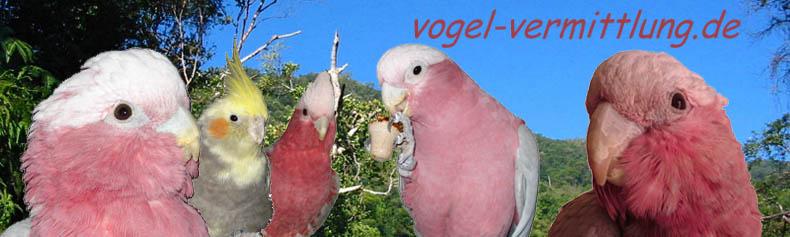 Blog der Vogel-Vermittlung